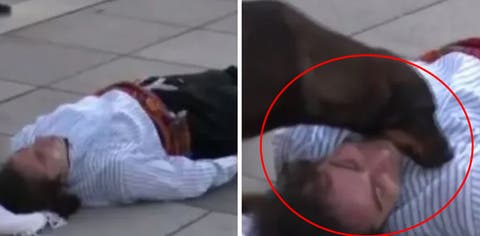 What did the stray dog do to the actor during the shooting / Dharti News