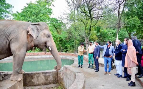 صدر مملکت عارف علوی کاون ہاتھی کوالوداع کہنے اسلام آباد چڑیا گھرپہنچ گئے
