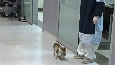 Photo of بلی بیمار بچے کو لے کر اسپتال پہنچ گئی، تصاویر وائرل ہوگئیں
